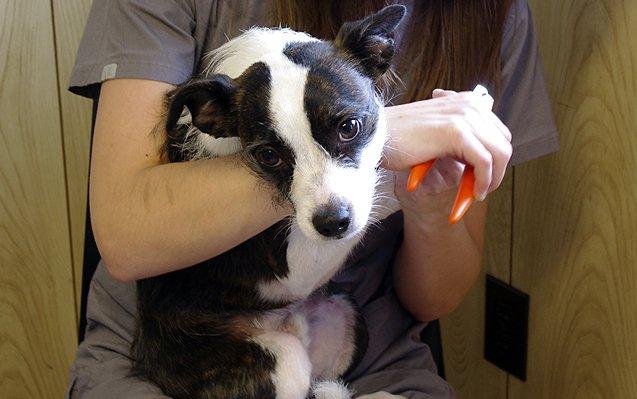 Doggy Manicure