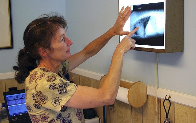 Pet Radiography
